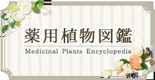 薬用植物図鑑