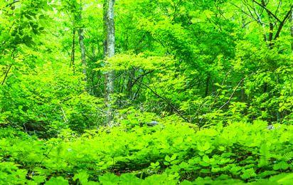 森との共生活動
